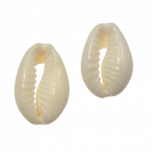 Cowrie Shell Beads (13 - 16 mm) Seashell (15 gram / approx. 40 pcs)