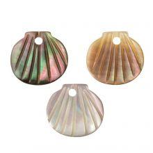 Shell Charm (9.5 - 10.5 x 10 - 11 x 2 - 3 mm) Black Lip Shell (3 pcs)