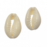 Kauri Shell Beads (18 - 20 mm) Seashell (21 pcs)