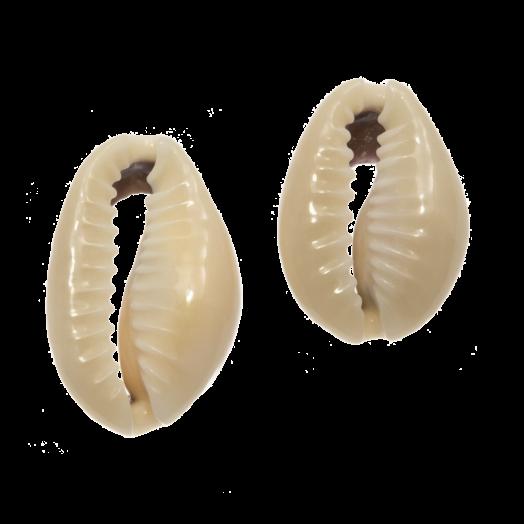 Kauri Shell Beads (13 - 20 mm) Dark Khaki (65 pcs)